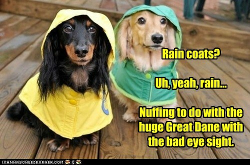 Rain coats?  Uh, yeah, rain...  Nuffing to do with the  huge Great Dane with  the bad eye sight.