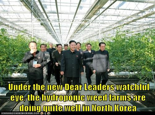 Under the new Dear Leaders watchful eye, the hydroponic weed farms are doing quite well in North Korea
