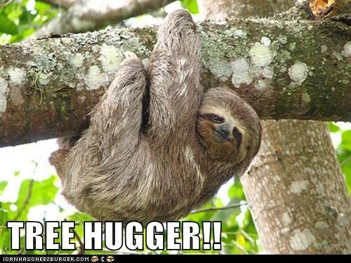 cheezburger,trees,tree huggers,TV,sloths,lolwork