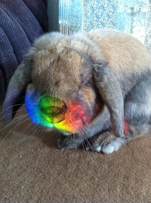 Bunday,happy bunday,rabbit,bunny,squee,rainbow,whiskers