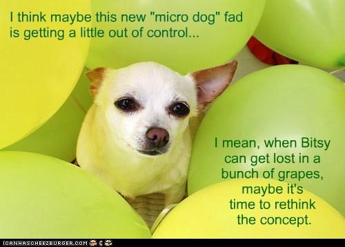 dogs,tiny,grapes,micro dog,extreme,chihuahua