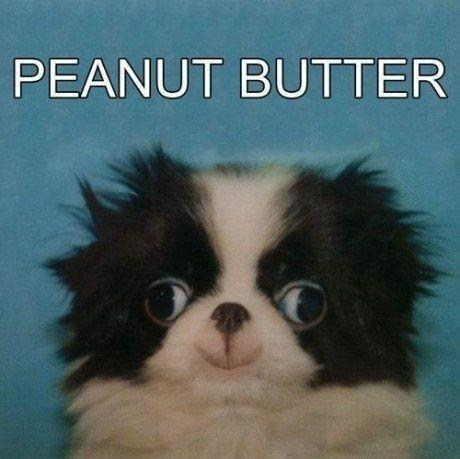 goggie,peanut butter,cute,dogs,derp