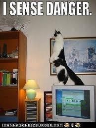 CAT SENSE!