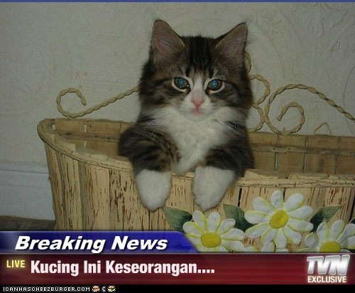 Breaking News - Kucing Ini Keseorangan....