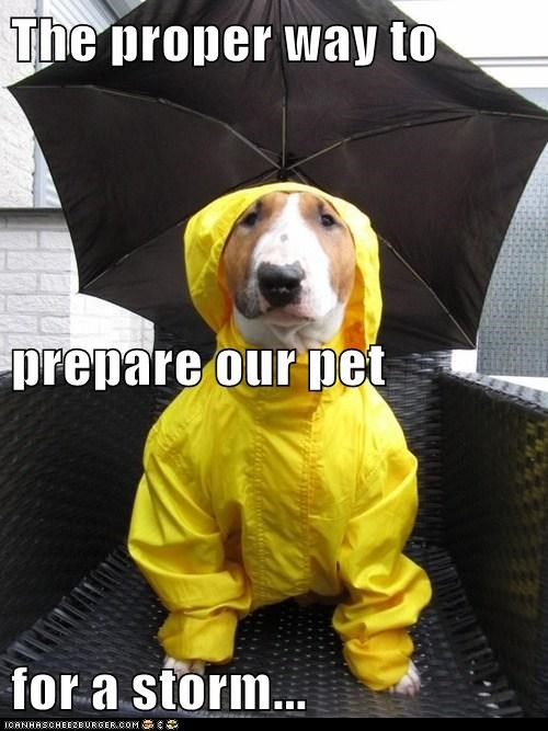 The proper way to prepare our pet for a storm...