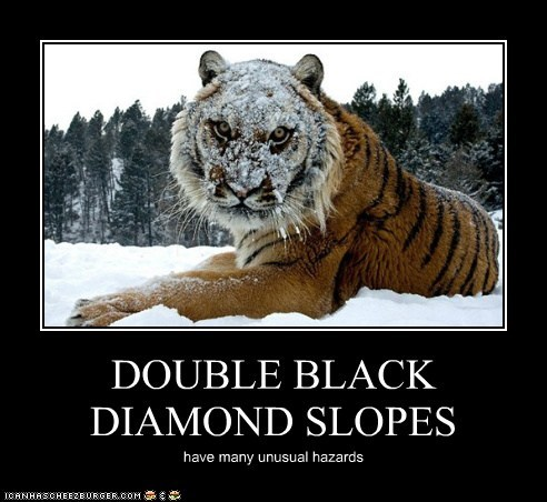 unusual,snow,tigers,hazards,slopes,angry,skiing
