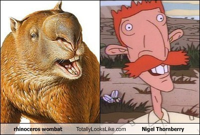 Rhinoceros Wombat Totally Looks Like Nigel Thornberry