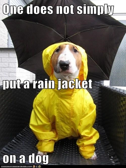 One does not simply  put a rain jacket  on a dog