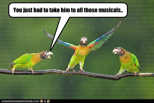 dancing,parrots,annoying,musicals,singing,angry