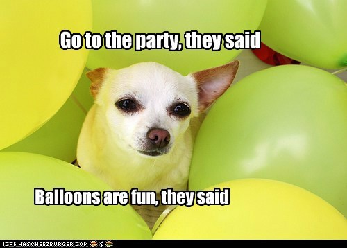 dogs,Balloons,Party,chihuahua,not fun,they sad
