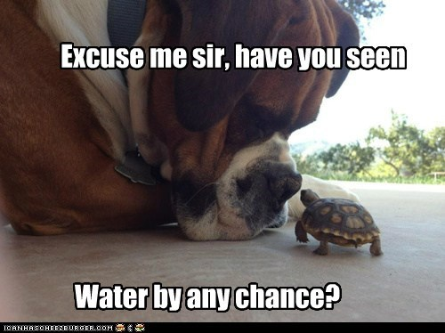 dogs,reptile,water,tortoise,turtle,boxer