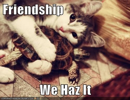 Friendship  We Haz It
