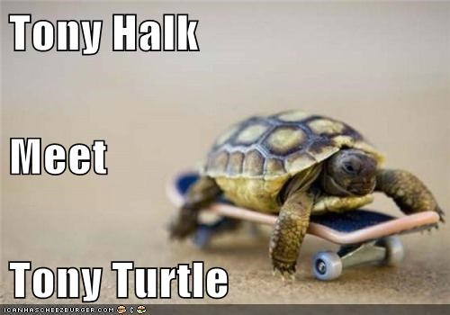 Tony Halk Meet Tony Turtle