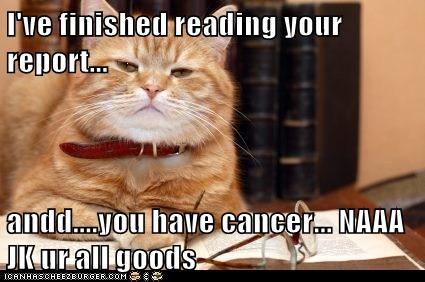 Reading cat WTF