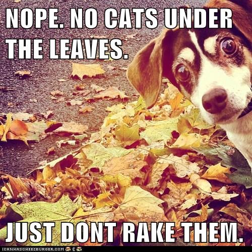 NOPE. NO CATS UNDER THE LEAVES.  JUST DONT RAKE THEM.