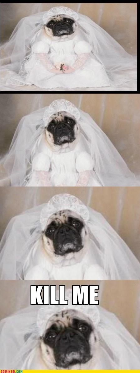 kill me,pug,pets,wedding dress,dogs
