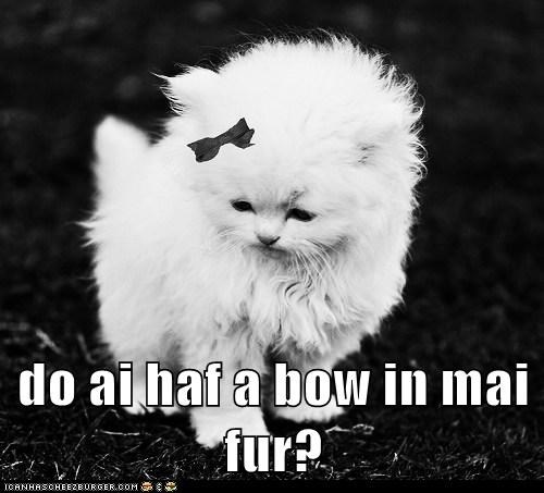 do ai haf a bow in mai fur?