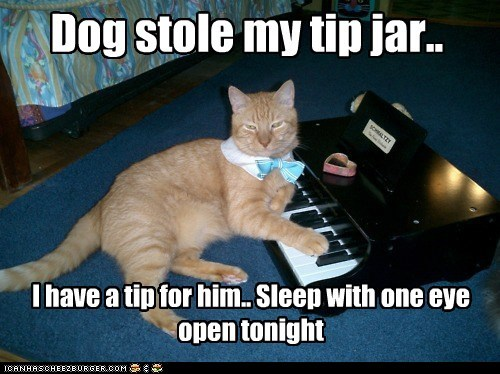 dogs,tip,revenge,captions,tip jar,sleep,threat,Cats