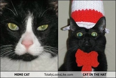 MEME CAT Totally Looks Like CAT IN THE HAT