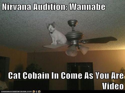 Music,seattle,captions,kurt cobain,Cats,reference,nirvana