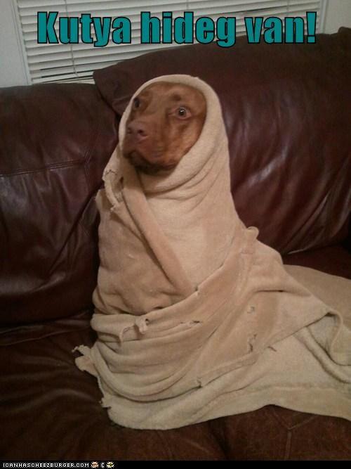 Kutya hideg van!