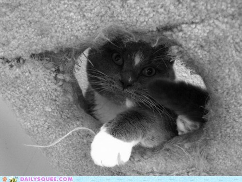 cat tower,reader squee,pets,climbing,Cats,squee