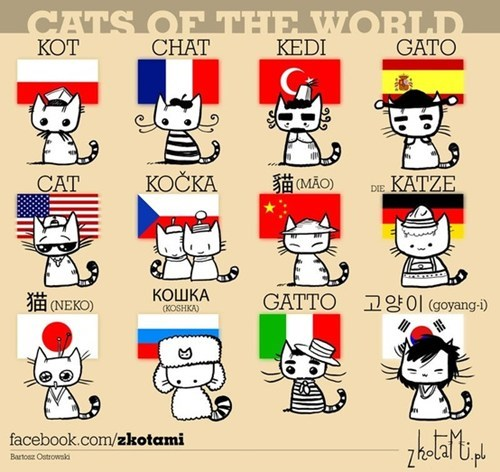 Cats of the world :3