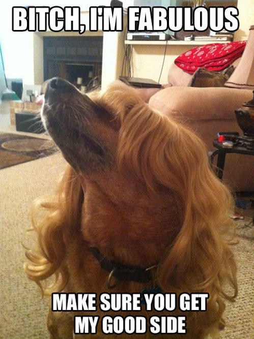 wig,dogs