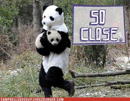 so close,panda,costume,panda bears
