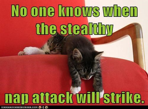 No one knows when the stealthy  nap attack will strike.