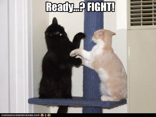Ready...? FIGHT!