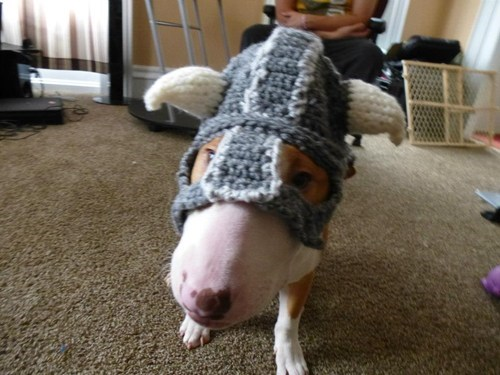 knight hat,knits,dogs