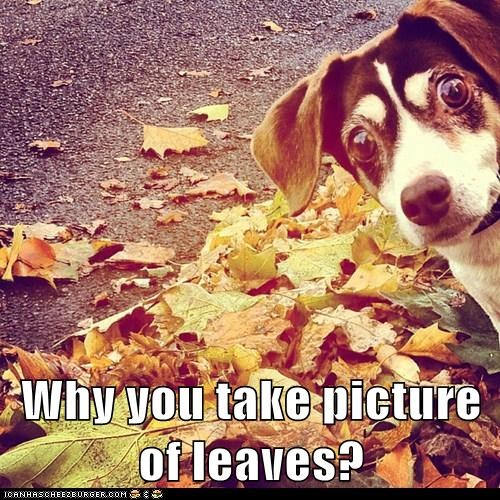 Why you take picture of leaves?