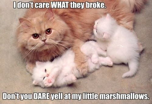protective mother,Cats