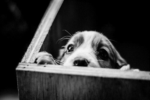 Cyoot Puppy ob teh Day: Peek-a-boo!