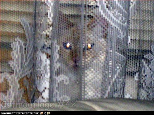 Catmouflage #42