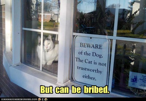 sign,captions,bribe,trust,Cats,dogs