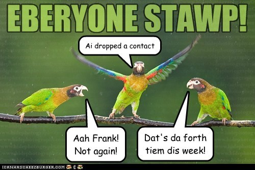 dropped a contact,parrots,not again,stop