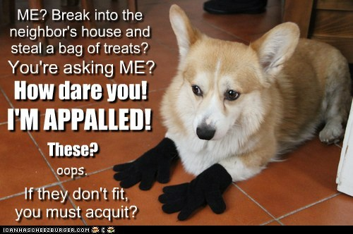 dogs,gloves,corgi,in trouble,thief,acquit