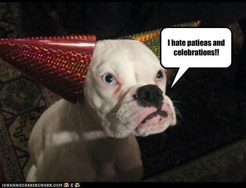 dogs,bulldog,hats,Party,grumpy,frown