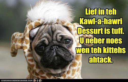 costume,dogs,kalahari,pug,desert,giraffes