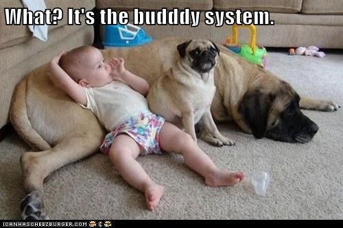 What? It's the budddy system.