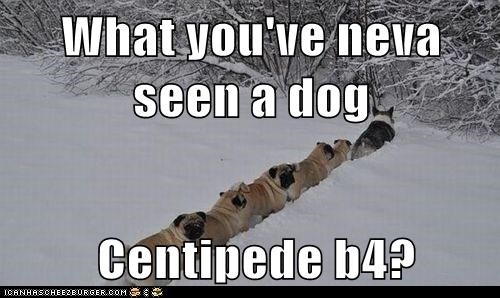 What you've neva seen a dog   Centipede b4?