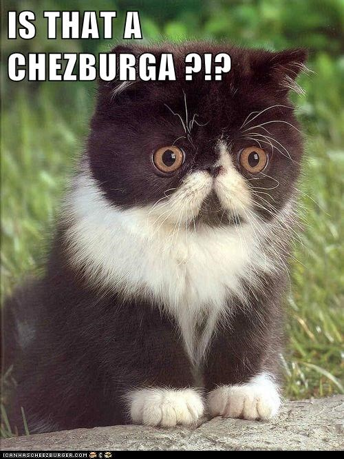 IS THAT A CHEZBURGA ?!?