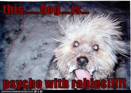 this......dog....is...  psycho with rabies!!!!!