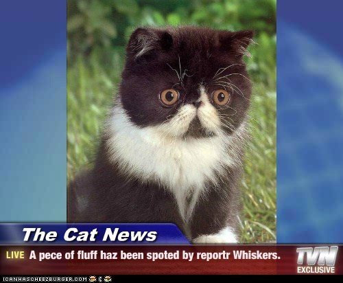 The Cat News - A pece of fluff haz been spoted by reportr Whiskers.