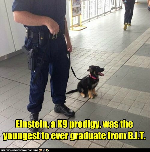 Einstein, a K9 prodigy, was the youngest to ever graduate from B.I.T.