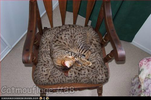 Catmouflage #88