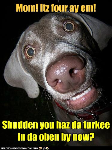 dogs,wake up,overslept,cooking,thanksgiving,Turkey,what breed
