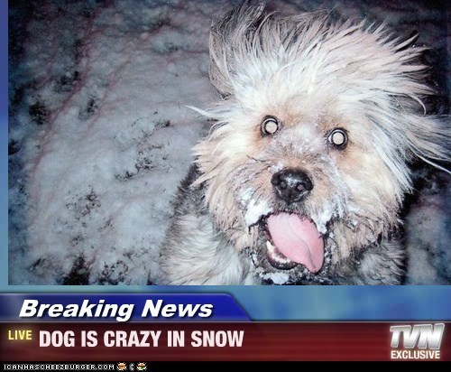 Breaking News - DOG IS CRAZY IN SNOW